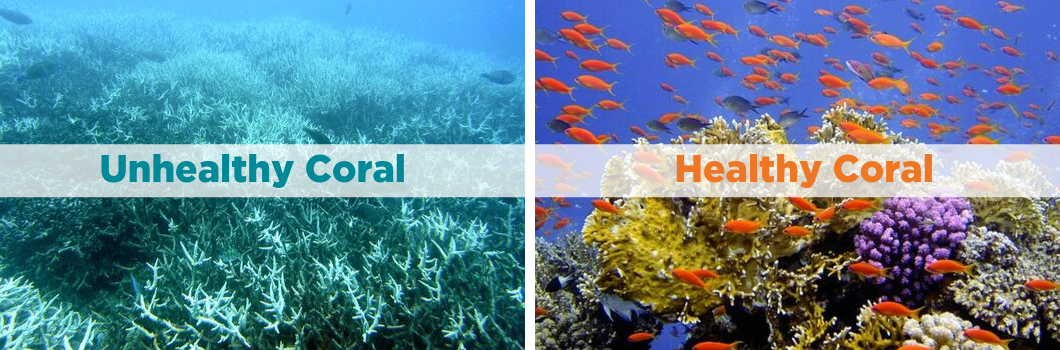 Figure 2: Comparison of unhealthy (bleached coral) and healthy coral (colourful coral) [9]